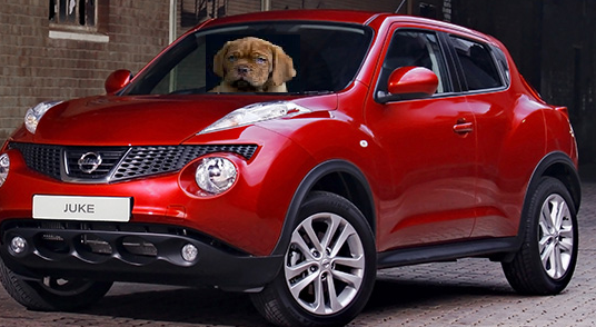 Nissan Juke - The Car for Dog Lovers
